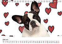 Bullys - Französische Bulldoggen 2019 (Tischkalender 2019 DIN A5 quer) - Produktdetailbild 6