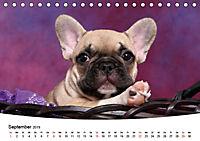 Bullys - Französische Bulldoggen 2019 (Tischkalender 2019 DIN A5 quer) - Produktdetailbild 9