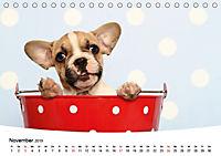 Bullys - Französische Bulldoggen 2019 (Tischkalender 2019 DIN A5 quer) - Produktdetailbild 11