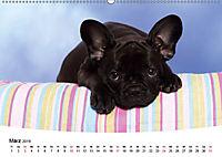 Bullys - Französische Bulldoggen 2019 (Wandkalender 2019 DIN A2 quer) - Produktdetailbild 3