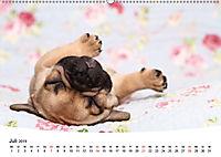 Bullys - Französische Bulldoggen 2019 (Wandkalender 2019 DIN A2 quer) - Produktdetailbild 7