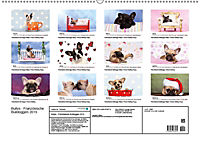 Bullys - Französische Bulldoggen 2019 (Wandkalender 2019 DIN A2 quer) - Produktdetailbild 13