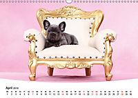 Bullys - Französische Bulldoggen 2019 (Wandkalender 2019 DIN A3 quer) - Produktdetailbild 4