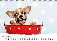 Bullys - Französische Bulldoggen 2019 (Wandkalender 2019 DIN A3 quer) - Produktdetailbild 11
