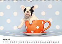 Bullys - Französische Bulldoggen 2019 (Wandkalender 2019 DIN A3 quer) - Produktdetailbild 1