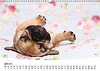 Bullys - Französische Bulldoggen 2019 (Wandkalender 2019 DIN A3 quer) - Produktdetailbild 7