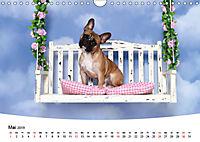 Bullys - Französische Bulldoggen 2019 (Wandkalender 2019 DIN A4 quer) - Produktdetailbild 5