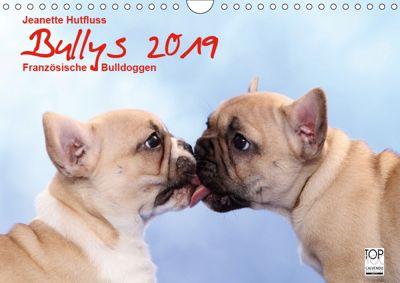 Bullys - Französische Bulldoggen 2019 (Wandkalender 2019 DIN A4 quer), Jeanette Hutfluss