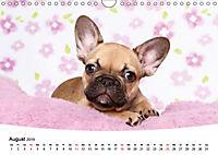 Bullys - Französische Bulldoggen 2019 (Wandkalender 2019 DIN A4 quer) - Produktdetailbild 8