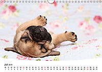 Bullys - Französische Bulldoggen 2019 (Wandkalender 2019 DIN A4 quer) - Produktdetailbild 7