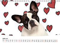 Bullys - Französische Bulldoggen 2019 (Wandkalender 2019 DIN A4 quer) - Produktdetailbild 6