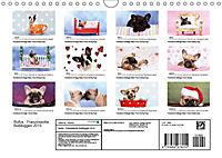 Bullys - Französische Bulldoggen 2019 (Wandkalender 2019 DIN A4 quer) - Produktdetailbild 13