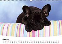 Bullys - Französische Bulldoggen 2019 (Wandkalender 2019 DIN A3 quer) - Produktdetailbild 3
