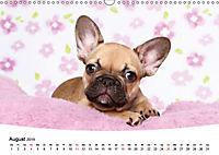Bullys - Französische Bulldoggen 2019 (Wandkalender 2019 DIN A3 quer) - Produktdetailbild 8