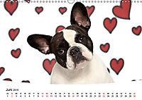 Bullys - Französische Bulldoggen 2019 (Wandkalender 2019 DIN A3 quer) - Produktdetailbild 6