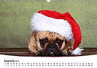 Bullys - Französische Bulldoggen 2019 (Wandkalender 2019 DIN A3 quer) - Produktdetailbild 12