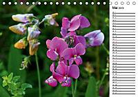 Bunte Flora des Kraichgaus (Tischkalender 2019 DIN A5 quer) - Produktdetailbild 5