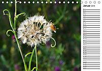 Bunte Flora des Kraichgaus (Tischkalender 2019 DIN A5 quer) - Produktdetailbild 1