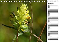 Bunte Flora des Kraichgaus (Tischkalender 2019 DIN A5 quer) - Produktdetailbild 4