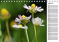 Bunte Flora des Kraichgaus (Tischkalender 2019 DIN A5 quer) - Produktdetailbild 6