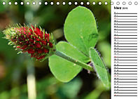 Bunte Flora des Kraichgaus (Tischkalender 2019 DIN A5 quer) - Produktdetailbild 3