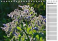 Bunte Flora des Kraichgaus (Tischkalender 2019 DIN A5 quer) - Produktdetailbild 12
