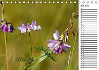 Bunte Flora des Kraichgaus (Tischkalender 2019 DIN A5 quer) - Produktdetailbild 7