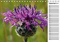 Bunte Flora des Kraichgaus (Tischkalender 2019 DIN A5 quer) - Produktdetailbild 9