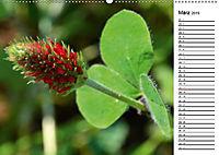Bunte Flora des Kraichgaus (Wandkalender 2019 DIN A2 quer) - Produktdetailbild 3