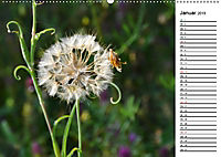 Bunte Flora des Kraichgaus (Wandkalender 2019 DIN A2 quer) - Produktdetailbild 1