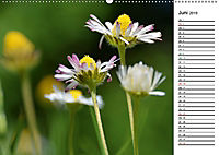 Bunte Flora des Kraichgaus (Wandkalender 2019 DIN A2 quer) - Produktdetailbild 6