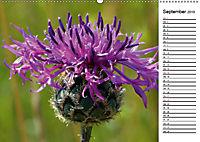 Bunte Flora des Kraichgaus (Wandkalender 2019 DIN A2 quer) - Produktdetailbild 9