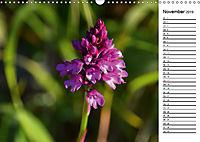 Bunte Flora des Kraichgaus (Wandkalender 2019 DIN A3 quer) - Produktdetailbild 11