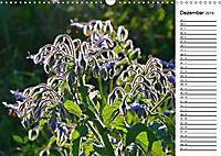 Bunte Flora des Kraichgaus (Wandkalender 2019 DIN A3 quer) - Produktdetailbild 12