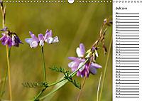 Bunte Flora des Kraichgaus (Wandkalender 2019 DIN A3 quer) - Produktdetailbild 7