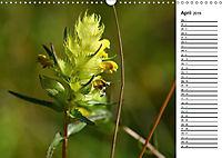 Bunte Flora des Kraichgaus (Wandkalender 2019 DIN A3 quer) - Produktdetailbild 4