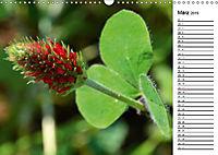 Bunte Flora des Kraichgaus (Wandkalender 2019 DIN A3 quer) - Produktdetailbild 3