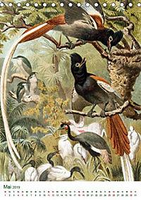 Bunte Welt der Vögel nach Alfred Brehm (Tischkalender 2019 DIN A5 hoch) - Produktdetailbild 6