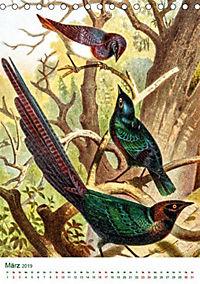 Bunte Welt der Vögel nach Alfred Brehm (Tischkalender 2019 DIN A5 hoch) - Produktdetailbild 9