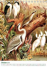 Bunte Welt der Vögel nach Alfred Brehm (Tischkalender 2019 DIN A5 hoch) - Produktdetailbild 7