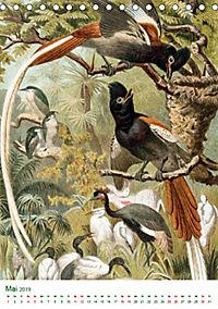 Bunte Welt der Vögel nach Alfred Brehm (Tischkalender 2019 DIN A5 hoch) - Produktdetailbild 5