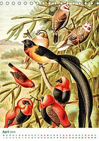 Bunte Welt der Vögel nach Alfred Brehm (Tischkalender 2019 DIN A5 hoch) - Produktdetailbild 4