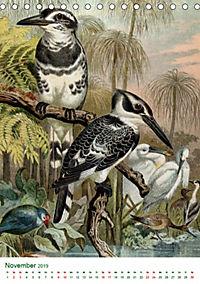 Bunte Welt der Vögel nach Alfred Brehm (Tischkalender 2019 DIN A5 hoch) - Produktdetailbild 11