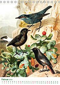 Bunte Welt der Vögel nach Alfred Brehm (Tischkalender 2019 DIN A5 hoch) - Produktdetailbild 2