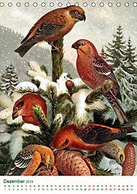 Bunte Welt der Vögel nach Alfred Brehm (Tischkalender 2019 DIN A5 hoch) - Produktdetailbild 12