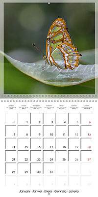 Butterflies Beauty of Nature (Wall Calendar 2019 300 × 300 mm Square) - Produktdetailbild 1