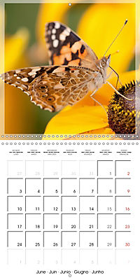 Butterflies Beauty of Nature (Wall Calendar 2019 300 × 300 mm Square) - Produktdetailbild 6