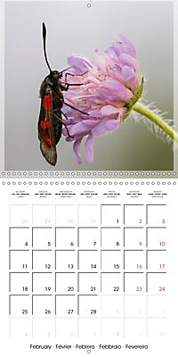 Butterflies Beauty of Nature (Wall Calendar 2019 300 × 300 mm Square) - Produktdetailbild 2