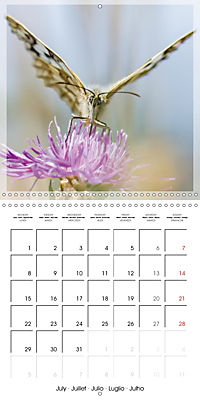 Butterflies Beauty of Nature (Wall Calendar 2019 300 × 300 mm Square) - Produktdetailbild 7