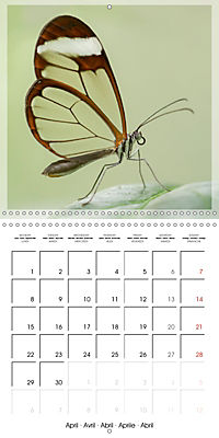 Butterflies Beauty of Nature (Wall Calendar 2019 300 × 300 mm Square) - Produktdetailbild 4